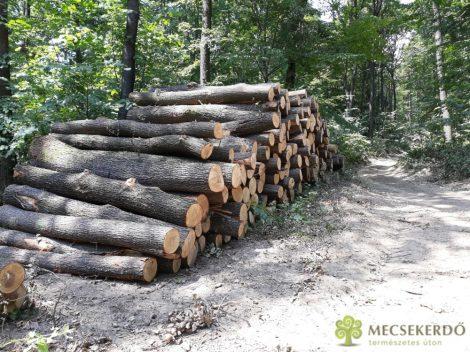 Tölgy/Cser hosszú tűzifa rakodón